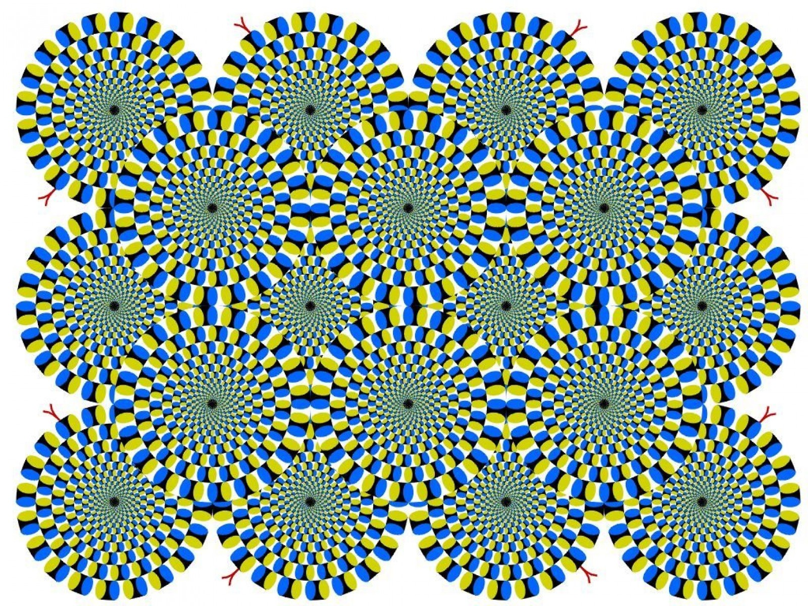 illusions optical illusion science trippy eye animated illusionary moving cool wallpapers brain eyes tricks mind perception visual move ilusion fast